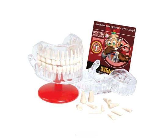 Игрушки для детей Профессор Эйн - Зубы Занимательная анатомия. Познавательный набор tm08539 купить в твоимодели.рф